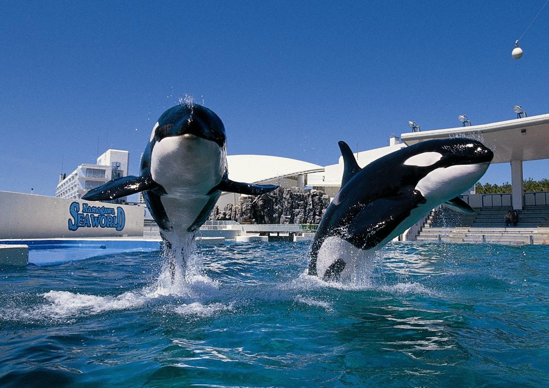 水族館テーマパーク・鴨川シーワールドへようこそ!