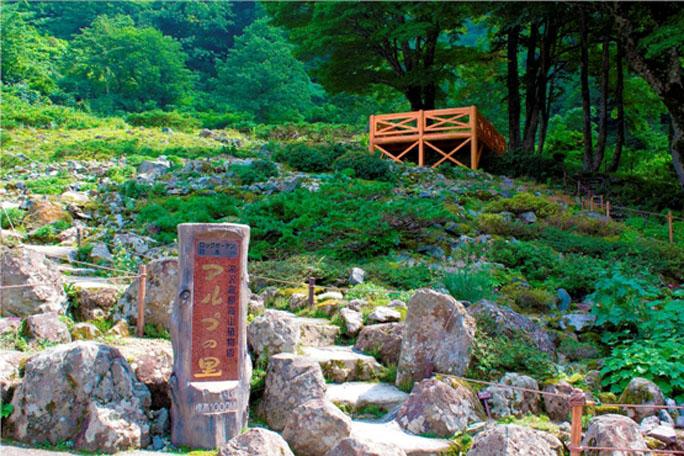 岩のお花畑