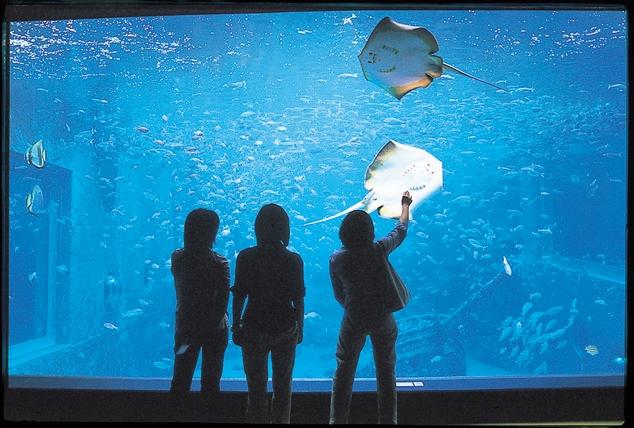 気分は海の中。高さ7mの海水館・大水槽