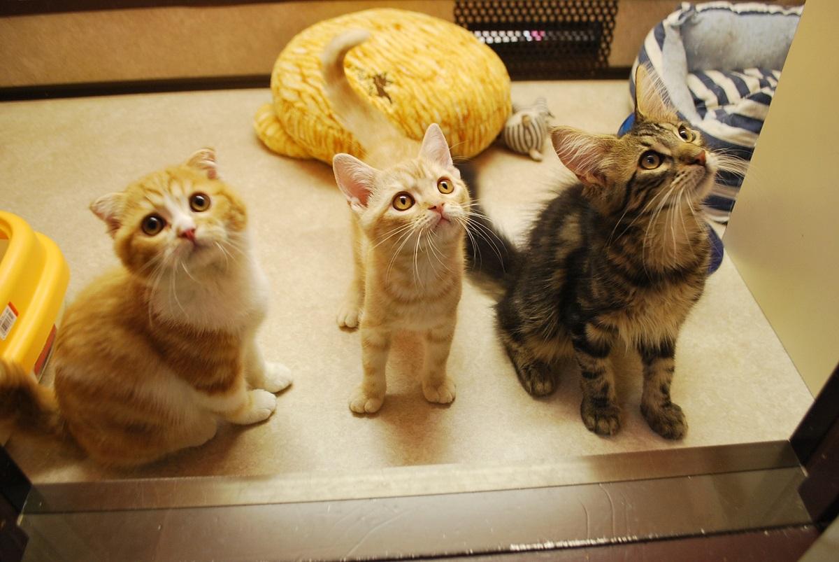 たくさんの猫たちがお待ちしてます!