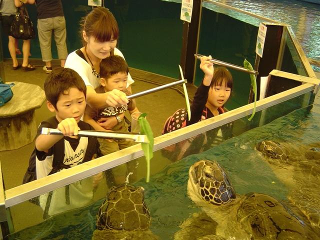 ウミガメ餌やり