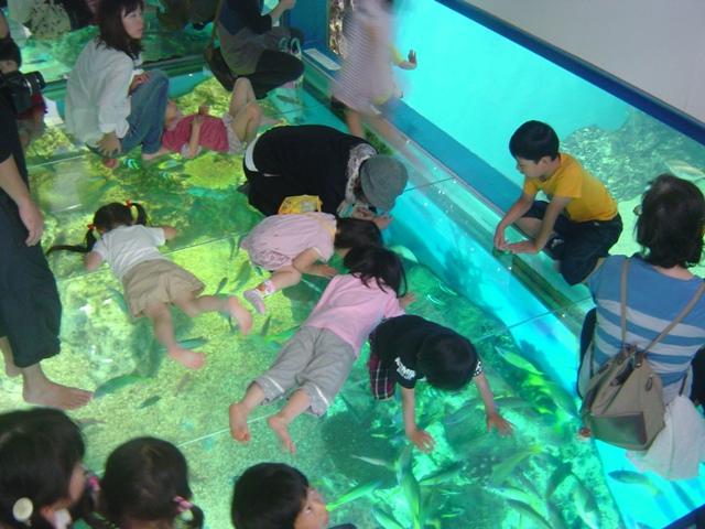 水面ガラス張り「さんごの海」水槽