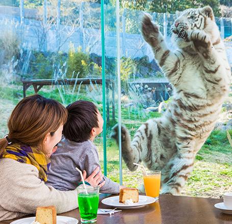 猛獣を見ながらの食事は感動