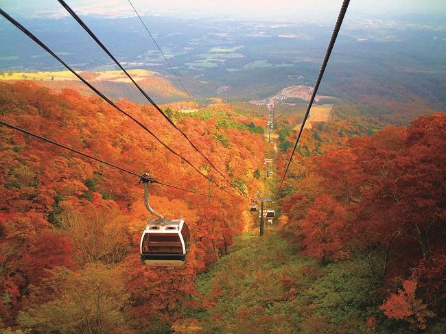 【那須 紅葉ゴンドラ】紅・黄・橙に染まる紅葉をゴンドラで一望