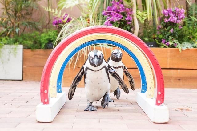 フレンドリースクエア(ペンギン)