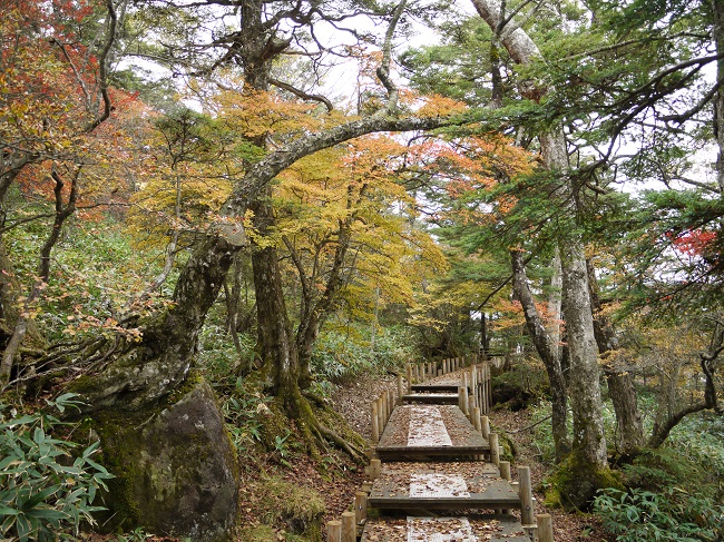 ハンターマウンテン紅葉ゴンドラ2018 山頂遊歩道