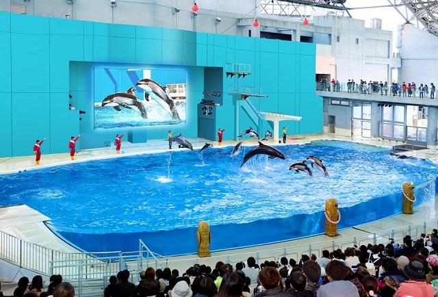 【横浜・八景島シーパラダイス】海の動物たちのショー(昼)