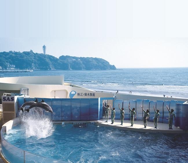 【新江ノ島水族館】江の島と富士山をバックにしたダイナミックなイルカショー