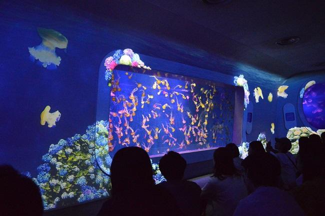【新江ノ島水族館】6月1日~ クラゲショー「海月の宇宙~あじさい~」