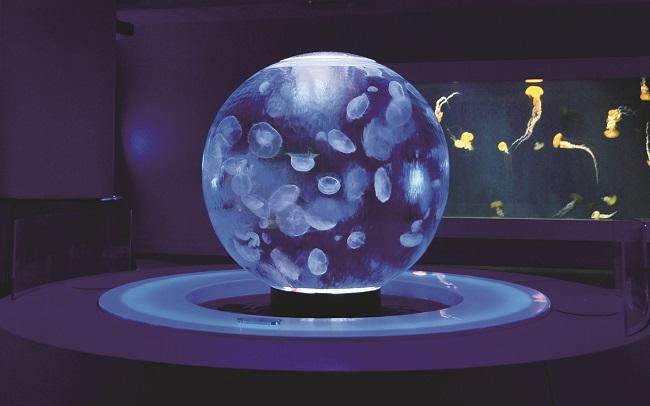 【新江ノ島水族館】クラゲの球型水槽