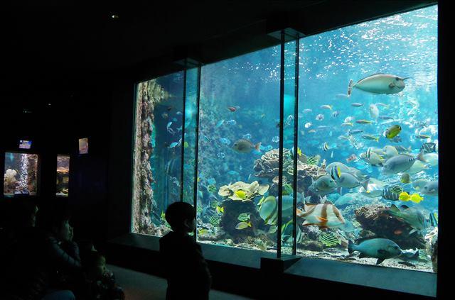 【水族館】串本の海大水槽