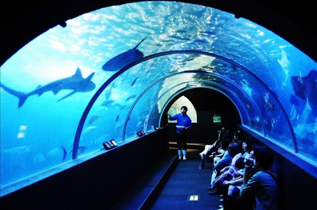 【水族館】水中トンネル水槽
