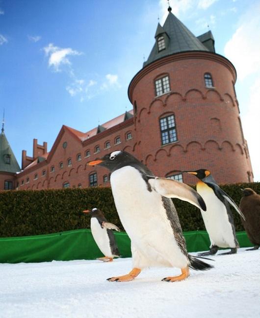 ニクス城とペンギン