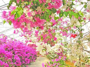 観光農園 ユートピアファーム宮古島